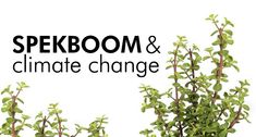 The Spekboom has amazing carbon-storing abilities, more than any other tree. Find out why you have to plant this amazing tree. Natural Ecosystem, Soil Improvement, One Tree, Carbon Footprint, Climate Change, Garden Design, Planting, Gardening, Succulents