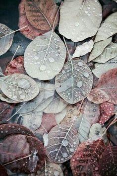 29 Ideas for nature autumn leaves beautiful Autumn Leaf Color, Autumn Leaves, Fallen Leaves, Autumn Colours, Soft Autumn, Autumnal, Jolie Photo, Color Inspiration, Inspiration Quotes
