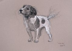 """Lovely Jack Russell Terrier dog LE print 'Waggy tail' from an original sketch by Heather Irvine 12"""" x 16"""" mounted and signed"""