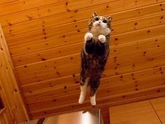 High jump for a tuna extra snack !