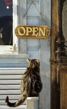 Open.. meow.. :)