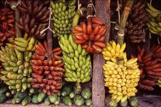 Bananas They are used in sweet and savoury foods and the green bananas can be substituted for plantains – above, a variety from which to choose.