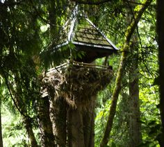 The Nest: A Wild Wooden Treehouse That Sways 23 Ft Off the Ground