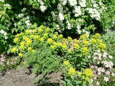 Kevään keltaista