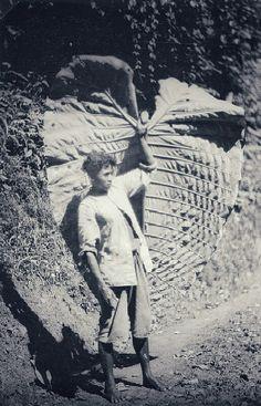 Dajak expeditielid met een groot blad tijdens de expeditie van H.F. Tillema naar de Apo Kajan op Oost-Borneo. 1931-1932