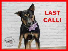 LAST CALL! LAST CALL! LAST CALL! Urgent Dogs of Miami · PANCHA (A1666965) I am a female black and tan German Shepherd Dog mix. The shelter staff think I am about 1 year and 6 months old and I weigh 46 pounds. I was found as a stray and I am available for adoption. https://www.facebook.com/urgentdogsofmiami/photos/pb.191859757515102.-2207520000.1420038885./899545373413200/?type=3&theater