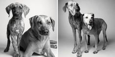 """Photographer Amanda Jones has captured the lives and photos of over 30 dogs in her book, """"Dog Years - Faithful Friends, Then and Now. Amanda Jones, Dog Photos, Dog Pictures, Savannah, Dog Ages, Dog Years, Old Dogs, Dog Show, Photography Projects"""