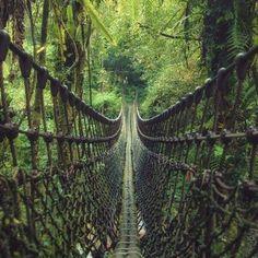 Yilan Taiwan hanging bridge in the jungle