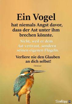 Ein Vogel hat niemals Angst davor...