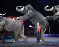 Justice for Ringling Bros. Elephants Locked in Boxcars for Four Days!