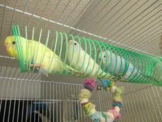 34 new ideas pet bird toys budgies Homemade Bird Toys, Diy Bird Toys, Diy Budgie Toys, Diy Toys, Diy Parrot Toys, Small Bird Cage, Pet Bird Cage, Bird Aviary, Bird Perch