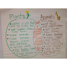 Living vs nonliving inquiry activity for kindergarten stem comparing living things plants and animals venn diagram httpgreenbeankindergartenwordpress ccuart