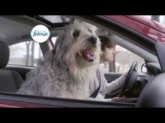 Driving Dog Odors | #noseblind | Febreze CAR Vent Clips - YouTube