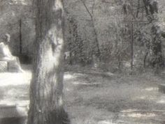 Photo of the Madonna of Bachelor's Grove Cemetery and woman's face on video.. article and video by Edward Shanahan