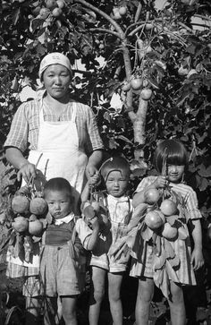 Japanese woman immigrant to Brazil and children enjoying a bountiful crop  of persimmons, Chacara Arara, Londrina, Paraná, ca. f788a13d30