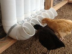 DIY PVC Pipe Chicken Feeder. A great idea to prevent chickens scooping the feed out of the feeder. by echkbet
