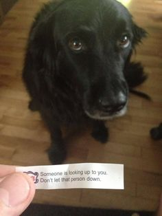 This angel who should never ever be let down. | 23 Dogs Who Will Make You A Happier Person