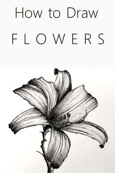 beautiful art Easy tutorial for drawing and sketching any flower you like. these easy steps with examples to create beautiful art which is a hit on social networks. Pencil Art Drawings, Drawing Sketches, Sketching, Horse Drawings, Drawing Skills, Drawing Techniques, Simple Flower Drawing, Flower Art Drawing, Beautiful Flower Drawings