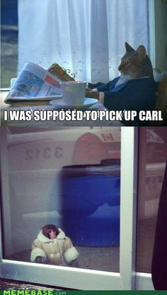 Poor Carl. (PS: This monkey KILLS me)    *This might be the funniest thing I have EVER seen on Pinterest!!!!!!