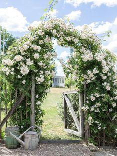 Balcony Plants, Garden Plants, Fresco, Terrace Decor, Container Flowers, Farm Yard, Garden Cottage, Garden Gates, Outdoor Projects