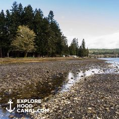 Beachcombing Hood Canal. More amazing spots to explore on our Instagram: https://instagram.com/explorehoodcanal/ #explorehoodcanal #wildsideWA #exploreWA #olympicpeninsula #potlatch #potlatchstatepark #lowtide