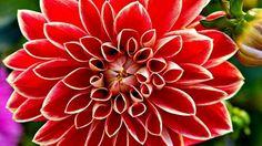 #FloralFriday  #floralfriday  #flowerphotography