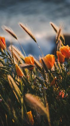 New landscape background iphone nature ideas Aesthetic Iphone Wallpaper, Of Wallpaper, Flower Wallpaper, Nature Wallpaper, Aesthetic Wallpapers, Wallpaper Backgrounds, Wallpaper Spring, Iphone Backgrounds Nature, Deco Floral
