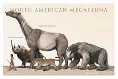 North American Megafauna | The mistake with this picture is that both Paraceratherium and the Wooly Rhinoceros only lived in Eurasia, never in North America though the rhinocerotoid family did have its origins in the Americas way back in the Miocene.