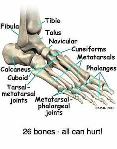 ANKLE JOINT PAIN complex joints causing a lot of misery. - health and beauty Foot Anatomy, Anatomy Bones, Anatomy Study, Ankle Anatomy, Medical Transcription, Medical Billing And Coding, Medical Facts, Medical Information, Medical Care