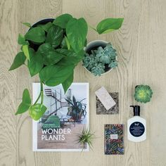 A little while ago the lovely team at Ivy Muse styled some dreamy flat lays for us; featuring some of their lush indoor greenery, sublime homewares and, of course, our Villa timber flooring in Pearl Timber Flooring, Laminate Flooring, Native Australians, Luxury Vinyl Tile, Floor Design, Wood Species, Plank, Ivy, Planting Flowers