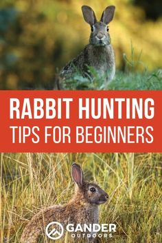 If you're new to the idea of rabbit hunting, you're not alone. In this article, I'll provide several easy and applicable tips to help you find success on your next rabbit hunting trip. Here are our rabbit hunting tips for beginners! Rabbit Hunting, Coyote Hunting, Pheasant Hunting, Archery Hunting, Hunting Gear, Hunting Dogs, Hunting Stuff, Quail Hunting, Bow Hunting For Beginners