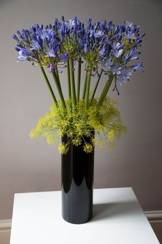 Agapanthus and dill