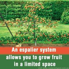 fruits and vegetables and neat vertical vegetable gardens veggies and 12476