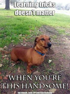 I'm pretty sure this is what my doxie thinks!