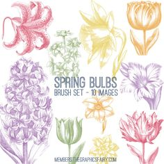 Beautiful Spring Bulbs Image Kit! TGF Premium - The Graphics Fairy