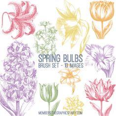 Beautiful Spring Bulbs Image Kit! TGF Premium - The Graphics Fairy