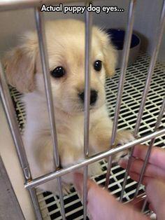 Actual puppy dog eyes...