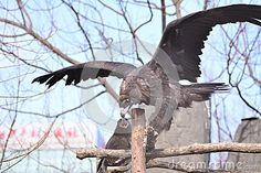 The vultures and eagles seemingly close, is the fact that the vulture to fly away to frighten the golden eagles.