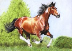 Pinto Horse by ManiaAdun on deviantART ~ traditional colored pencil art