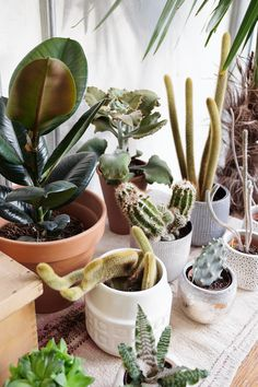 LadyLikes: That Room to Grow