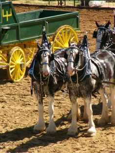 The Hawks Ranch; Love seeing their Clydesdales out at the Draft Horse Classic Big Horses, Work Horses, Horses And Dogs, All The Pretty Horses, Beautiful Horses, Horse Wagon, Clydesdale Horses, Horse And Buggy, Horse Accessories