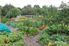 allotment_summer_tour14