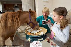 Via HorseNation.com >> The Problem With Ponies: They will eat you out of house and home!  (and other truisms about our tiniest friends)
