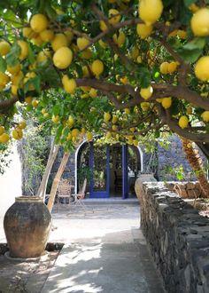Lemon trees - Hotel Signum - Malfa - Salina - Italy