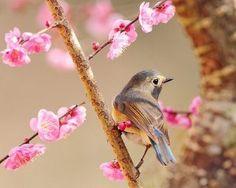 Primavera/Spring sfondi-wallpaper-gif-cards