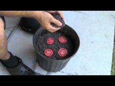 The Easiest Way To Grow Tomato Seedlings - YouTube