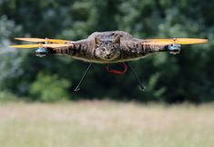 Dutch artist Bart Jansen turns his dead cat into a remote-controlled helicopter, June in London, Britain.