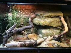 Reptile Steppe Runner Vivarium Terrarium