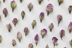 Dried flowers art with dried rosebuds, the installation Pavilion Blue by AIRBNB Pavilion at Seventeen Gallery London.