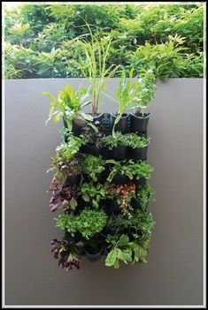 Horticulture Strategies For Fun And Functional Purposes - Special Garden Design Jardin Vertical Diy, Vertical Planting, Vertical Garden Diy, Vertical Gardens, Culture D'herbes, Herb Garden Pallet, Organic Horticulture, Vegetable Garden Design, Gardens